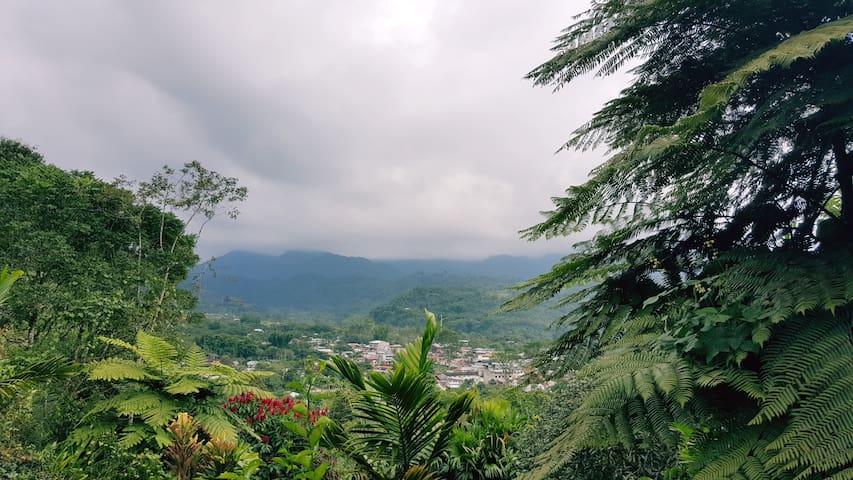 Foto tomada desde un Mirador. MINDO CLOUD FOREST