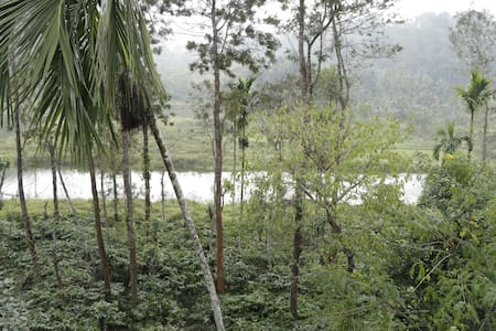 Springdale : a lush coffee plantation in Coorg