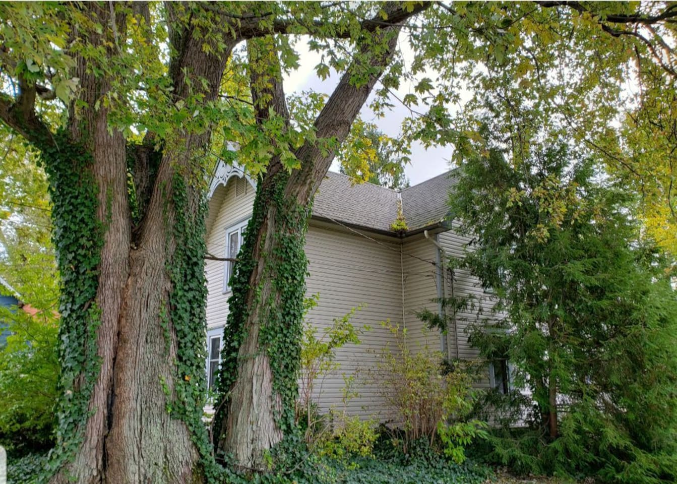 Front side yard. One of the oldest trees on the street.