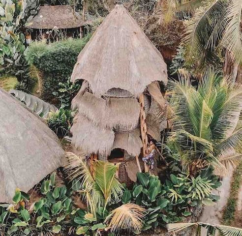 Bambusnest in den Reisfeldern 3