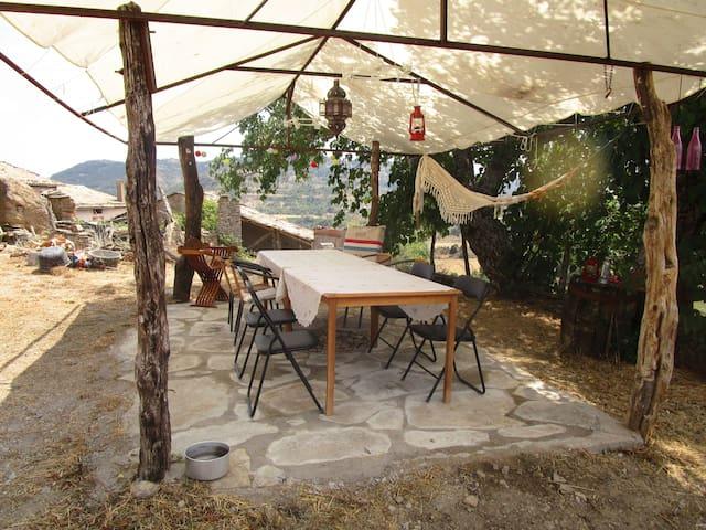 Beschaduwd terras onder de moerbeiboom