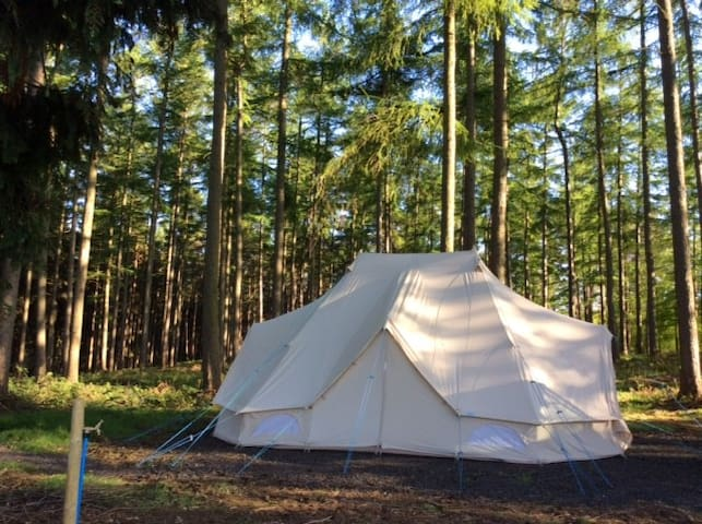 Magpie Bell Tent - Silligrove Farm