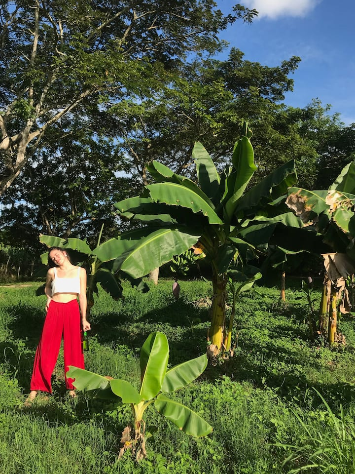 Get lost in plantain fields