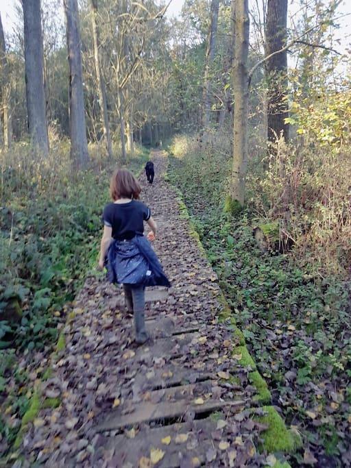 Bos op wandelafstand