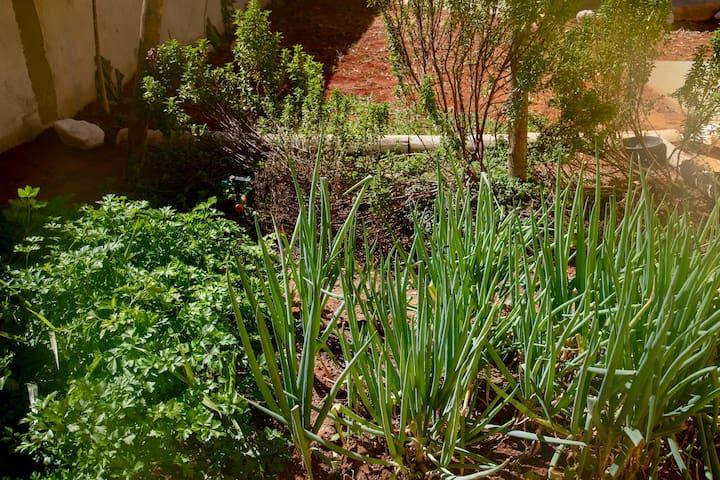 Horta Orgânica da Vila dos Cristais - Pode ser utilizada por todos os hóspedes para fazer deliciosas comidinhas.... (Verduras e temperos e salsas diversos dependendo da época)