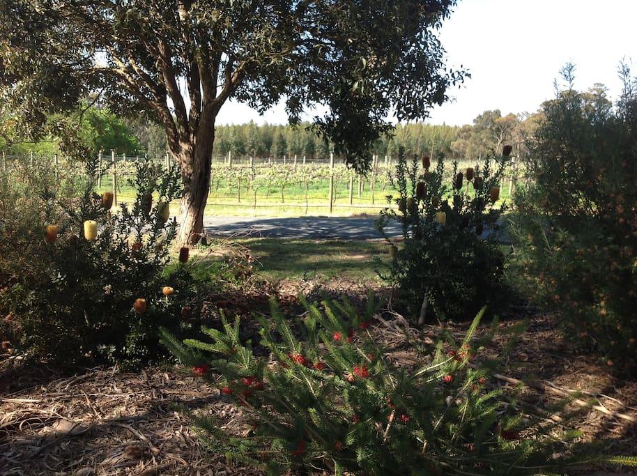 Vineyard and gardens