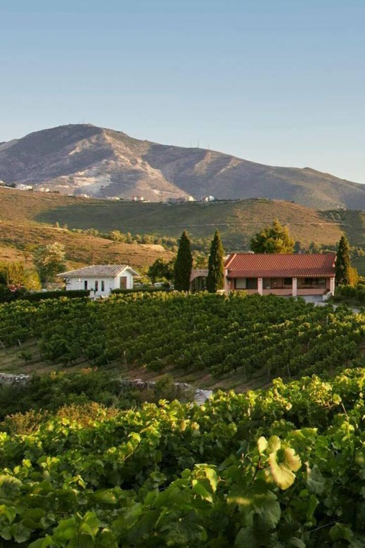 Enjoying beautiful family owned vineyard
