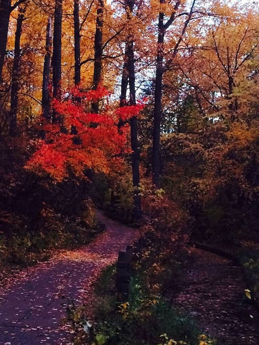 Enjoy walking in our gorgeous ravine during the fall.