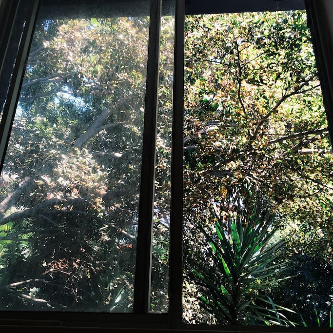 Your second window - backs onto the lush garden.