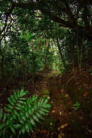 Sendero rodeado de naturaleza, donde disfrutará de una caminata tranquila, escuchando el canto de las aves.