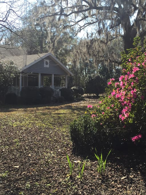 Yard is bordered by Azaleas and for weeks each spring they are spectacular.