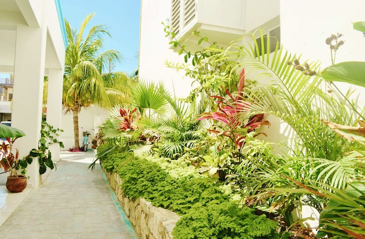 Beautiful Suite by the ocean! Corales A 1BR Garden