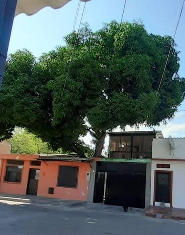 Casa del Árbol- Habitación