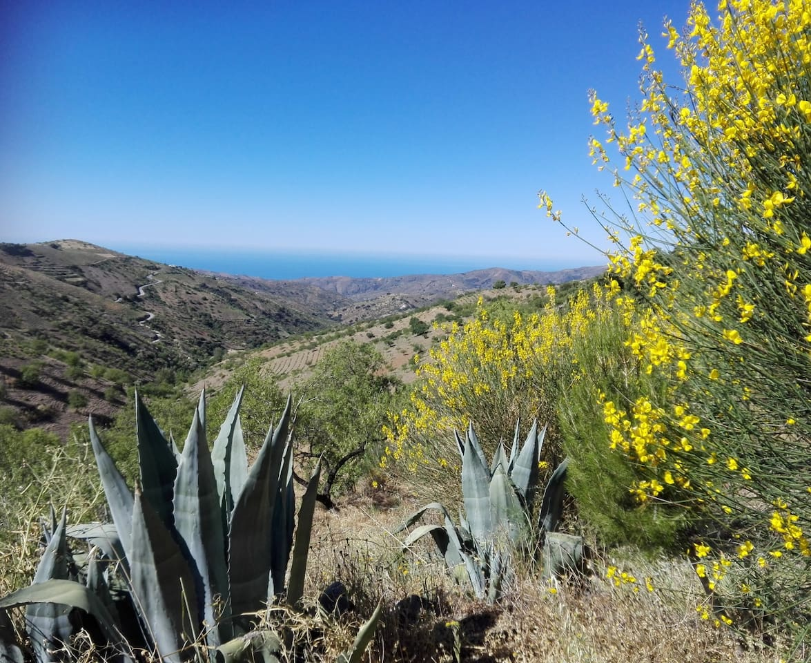 Beautiful landscape with preserved, native flora and fauna and ocean views