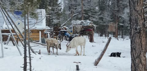 East taiga reindeer herders's winter camp