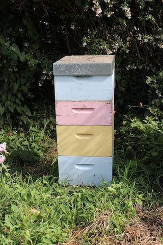 Our beehive.  The bees will not bother you.  Most people walk right pass and do not even notice the beehive tucked away.