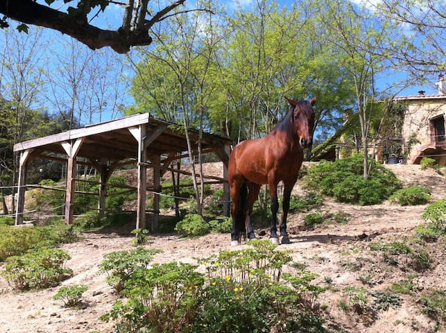 Horses live outdoors