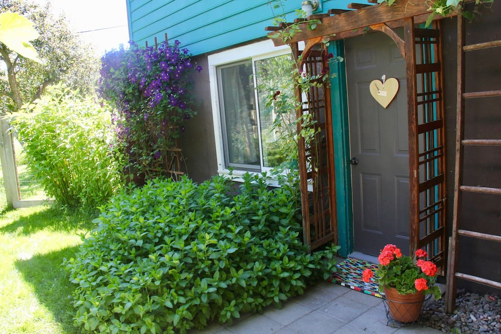 front door to apartment surrounded by mint, clematis, grapevines and fruit trees