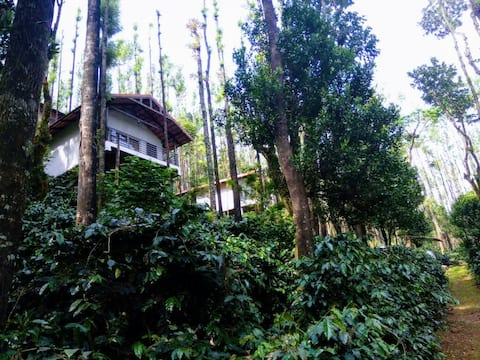 Hill View Homestay, Homestay in Mullayanagiri Road