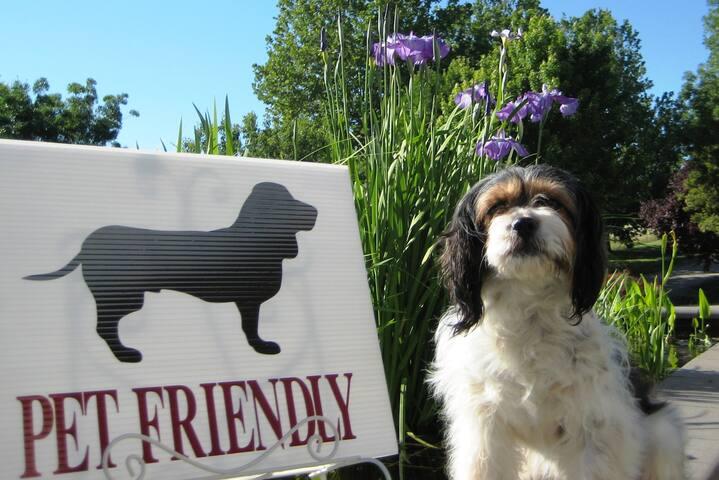 Small Dog Pet Friendly