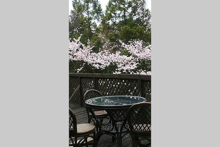 During springFrom April 15 to April 25 throughout the year, you can see cherry blossoms from the terrace