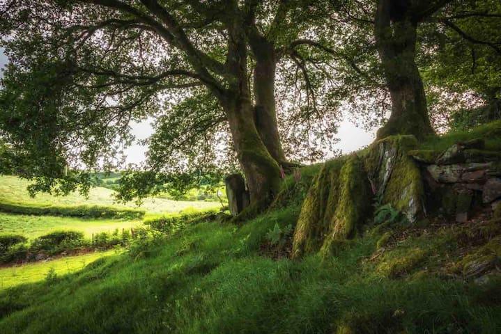 Glamping Llugwy  Pod in  Betws y Coed Snowdonia.