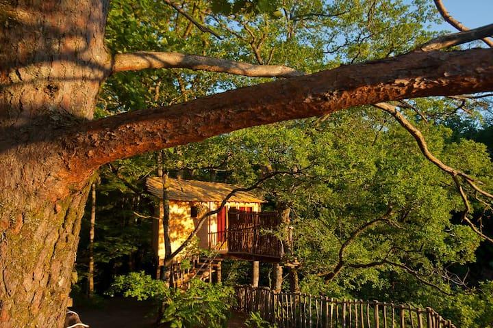 Cabane Epicea Souhait - Hêtre sous le Charme