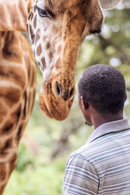 Interacting with Giraffes
