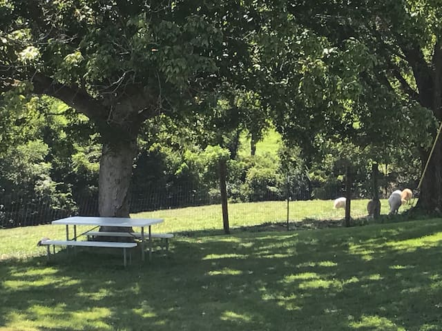 You can walk out the door to Relaxing Views and have a cup of tea at the picnic table!