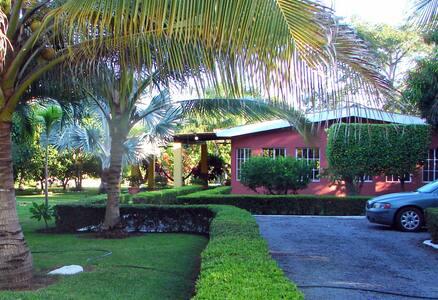 Tropical Dream   Sueño Tropica, Las Veraneras