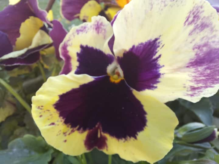 Flower Home Brissago