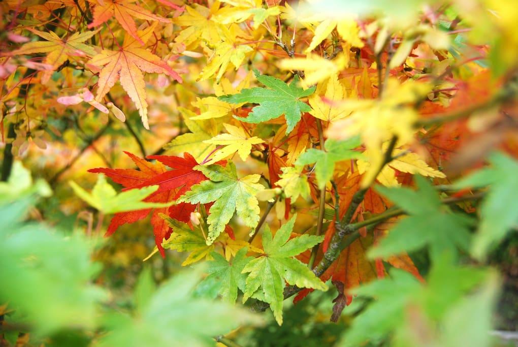 Autumn garden.