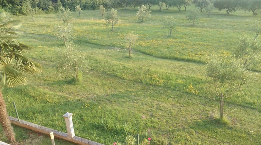 Cosy apartment with lovely olive orchard view