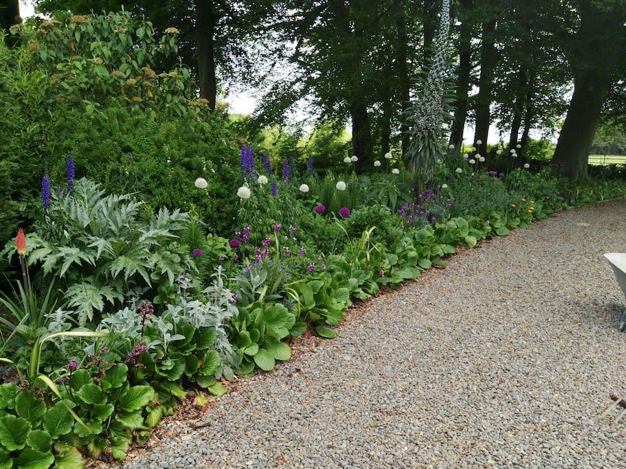 herbaceous /mixed border