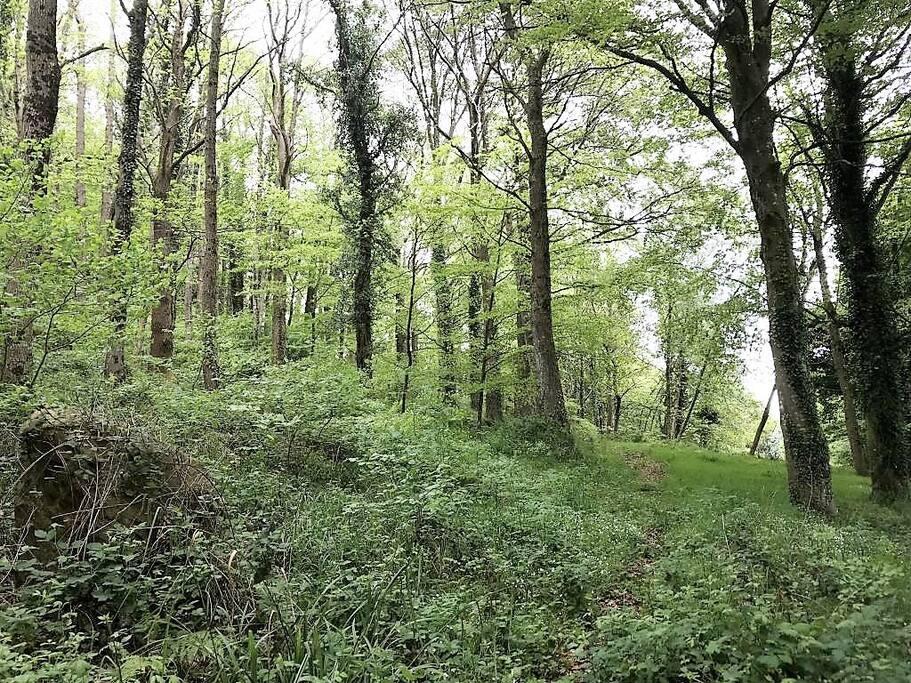 Le sentier forestier Ouest