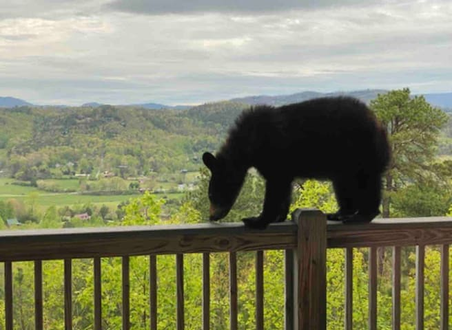 Private Smoky Mountain VIEWS newly updated cabin