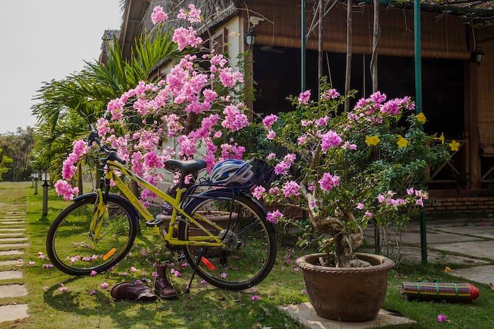 Bougainvillea flowers in Spring Garden.