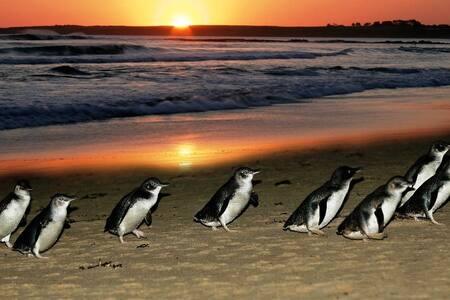Philip Island Ramada Resort(Villa) - Cowes