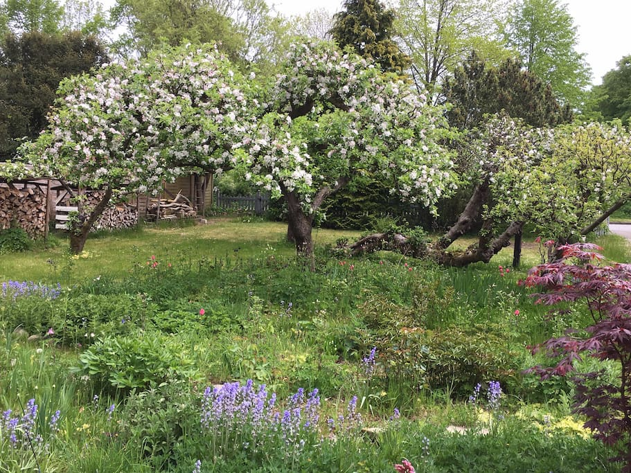 Blick von der Frühstücksterasse in den Garten