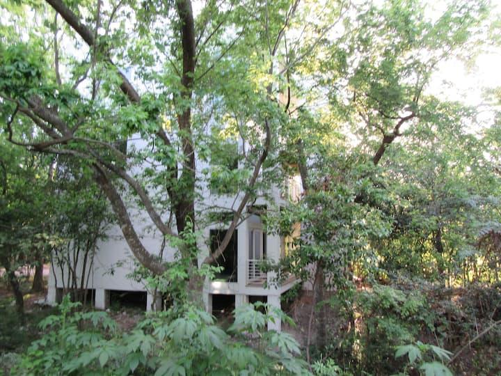 1st Flr Treehouse Apt, Washington St/ Heights Area
