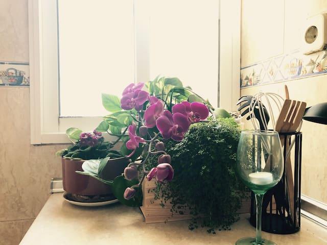 Cozy single room - charming apartment in La Latina - Madrid - Apartment