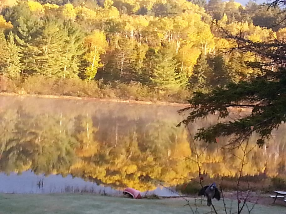Every season has it's beauty. The golden glow of autumn fall colours.