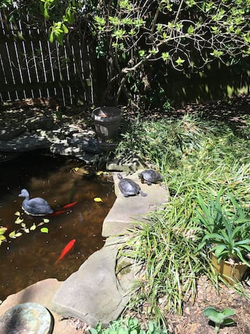 Rescued Red Eared Sliders, Maxine and Henry love a sunny spot by the pond. The bubbling sounds of the waterfall smooth any wrinkles away in your day.