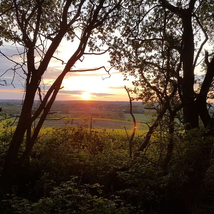 Sunset from Wytham Woods