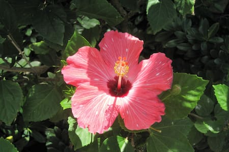 Hibiscus Apartment