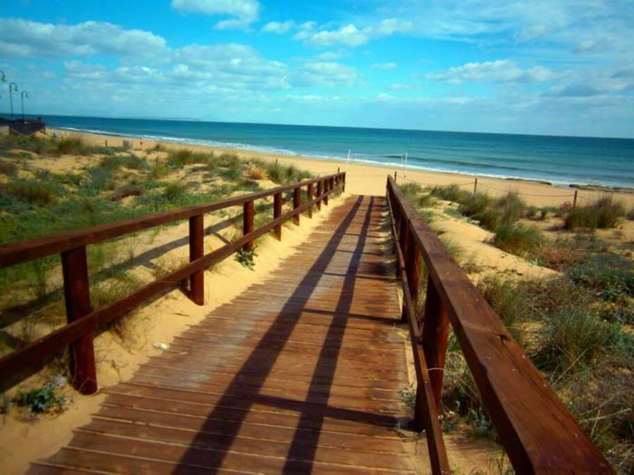Пляж и чистый песок, дюны и  сосновый парк