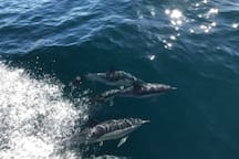 Dolphins in the Fiord