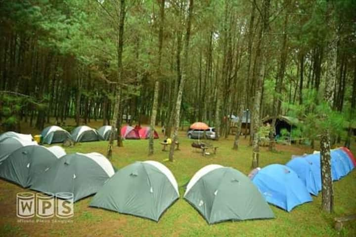 Camping Ground,Pinggir Sungai & hutan pinus sejuk