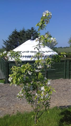 Eco friendly, Cosy, Quiet,Welsh Yurt