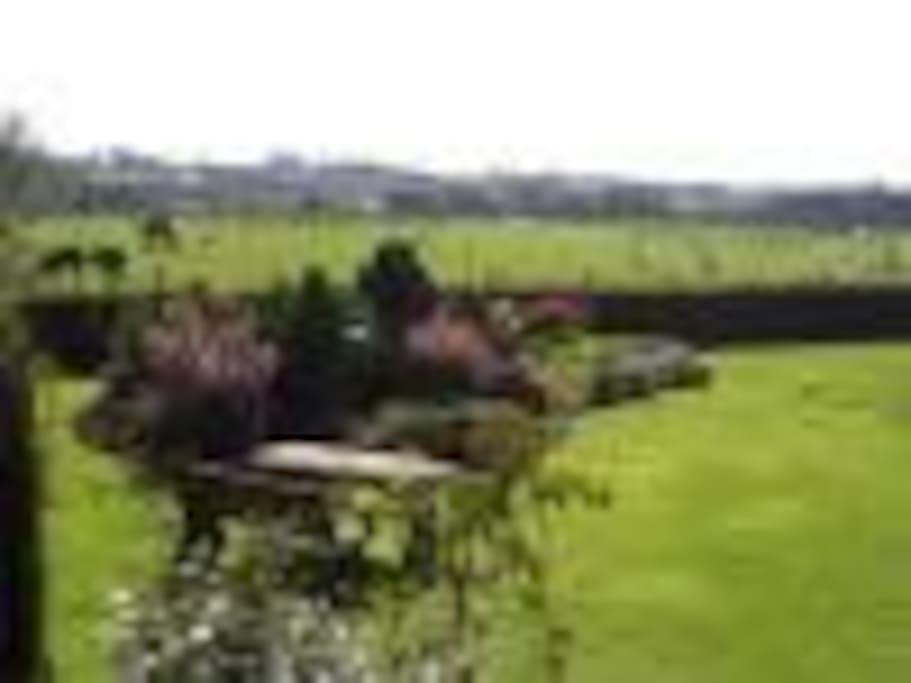 Garden view from B&B
